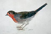 William Turner - Robin, from The Farnley Book of Birds
