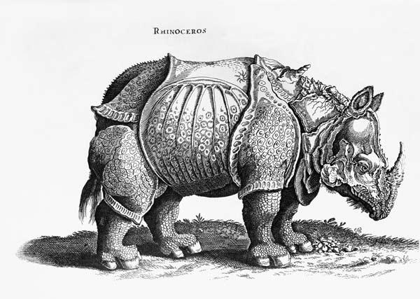 Rhinoceros, no.76 from ''Historia Animalium'' Conrad Gesner (1516-65) published in July 1815