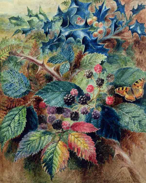 Blackberries and Holly with a Butterfly