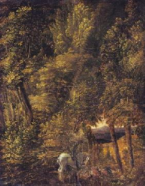 Woodland landscape with piece of Georges Drachenka