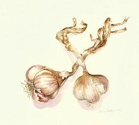 Garlic bulbs, 2005 (w/c on paper)