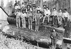 Woodcutters in California