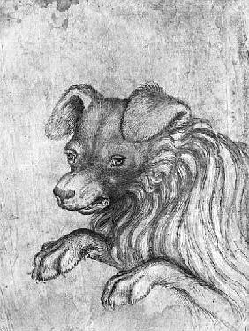 Head of a dog, from the The Vallardi Album