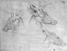 Two heads of stags, one head of a doe, from the The Vallardi Album