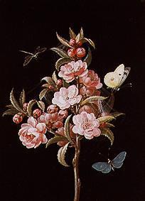 Japanese quince (or cherry) with dragon-fly and bu
