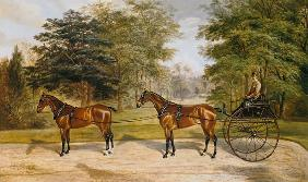 Two horses, harnessed in tandem, pulling a carriage