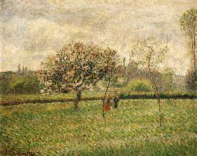 Pissarro, Camille : Blossoming apple trees in ...