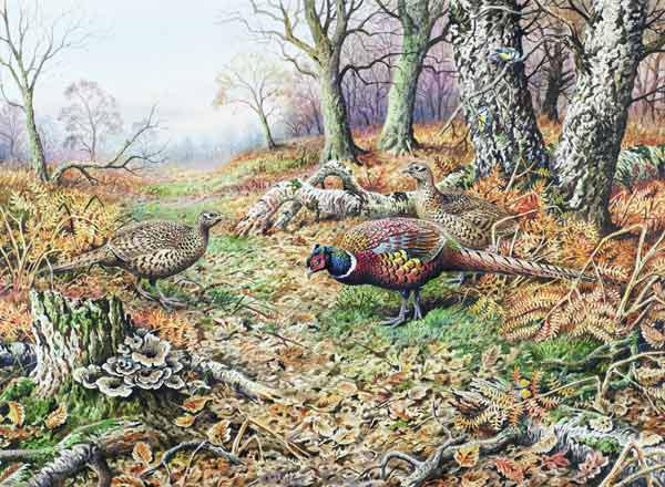 Pheasants with Blue Tits