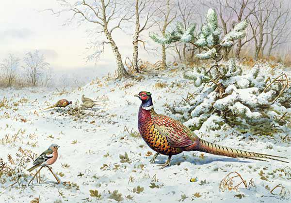 Cock Pheasant and Chaffinch