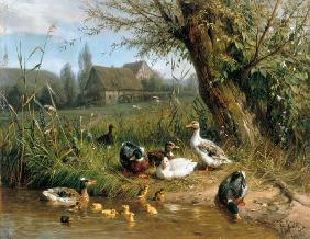 Carl Jutz - Ducks with chicks at the water