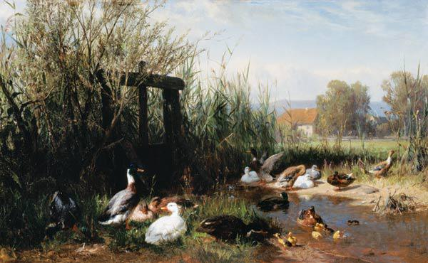 Ducks at the brook