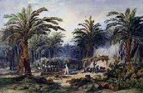 The Fabrication of Palm Oil at Whydah, West Coast of Africa