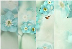 Forget me not.....