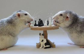 Playing  Chess!