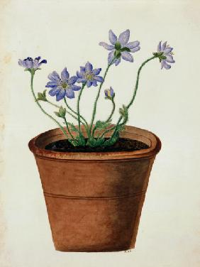 Purple Flowers in a Terracotta Pot