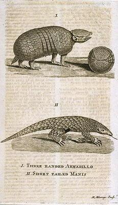 Three Banded Armadillo and Short Tailed Manis, from 'The Gentleman's Magazine', published c.1773, en