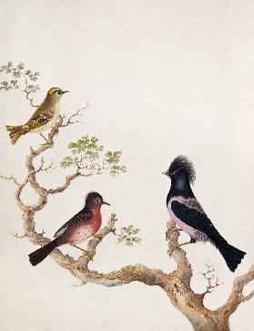 A Golden Crested Wren, a Dartford Warbler and a Rose Coloured Thrush or Ouzel