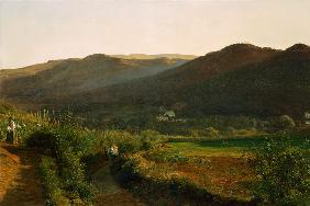 Landscape with vineyards
