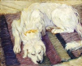 Lying dog (dog portrait)
