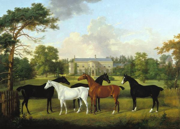 Five racehorses in front of an English country hou