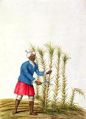 Slave cutting sugar cane, from the Illes de l'Amerique in the Antilles, end of the 17th century (w/c