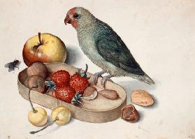 Still life with Dwarf Parrot