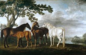 Mares and Foals in a River Landscape