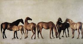 Mares with Foals