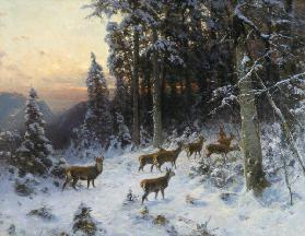 A winter evening in the Black Forest