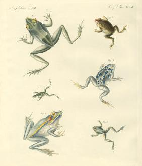 New-discovered frogs and toads