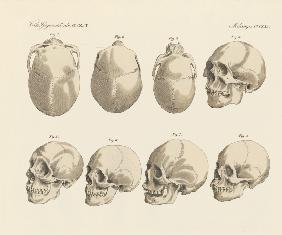 The cranial of the five human races