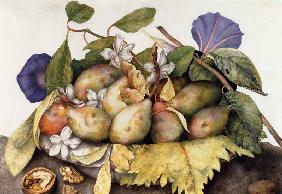 Still life with Plums, Walnuts and Jasmine  on