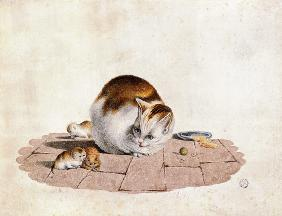 Cat mother with three boys at a food plate