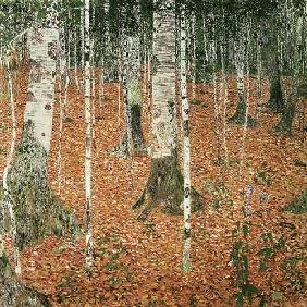 Birch woods in autumn.