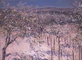 Orchard with Flowering Apple Trees, Colombes
