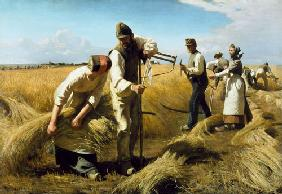 The grain harvest
