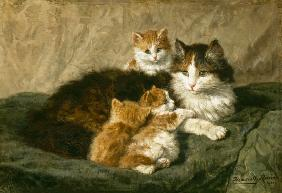Cats 1900