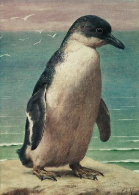Study of a Penguin