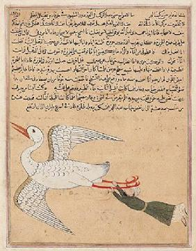 Ms E-7 fol.72a Merchant from Isfahan Flying, from 'The Wonders of the Creation and the Curiosities o