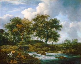 Oaks at a pouring brook.