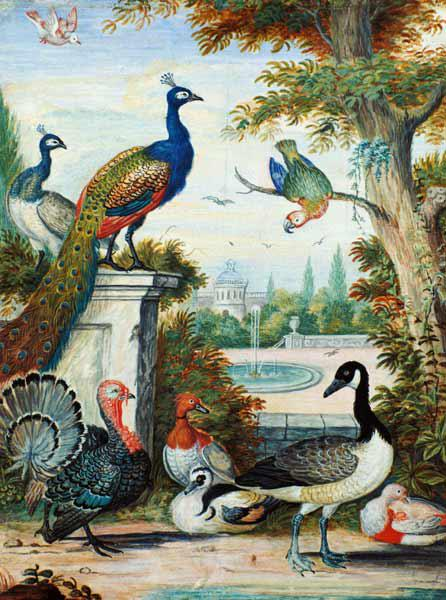 Exotic Birds and Domestic Fowl in a Picturesque Park