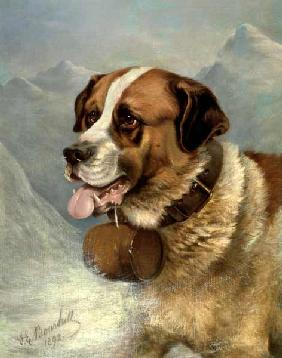 A Portrait of a St. Bernard in an Alpine Landscape