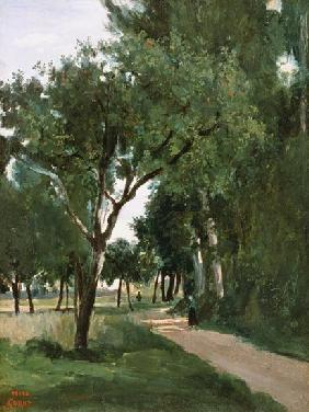 Avenue in the Woods, near Chaville