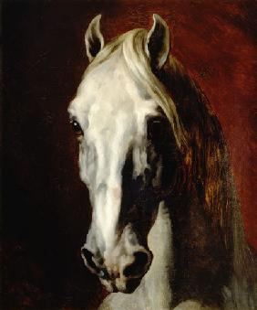 Head of a white horse. 1812/1816