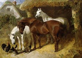 Horses and chickens on a farm 1845