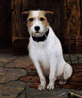 Portrait of Terrier