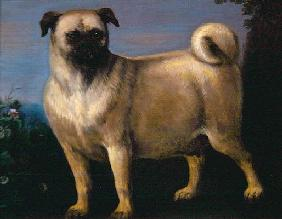 A Pug in a Landscape (oil on canvas)