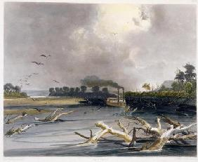 Snags (sunken trees) on the Missouri, plate 6 from Volume 2 of 'Travels in the Interior of North Ame