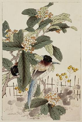 Blue tailed birds among the blossom from Bunrei Kacho Gafu, pub. 1885, and