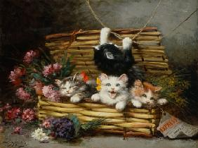 A basket full of cats